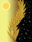 Wheat day and night Stock Photography