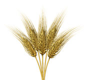 Wheat design Stock Image
