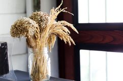 Wheat dried in glass jas to decorate the room. Wheat dried in glass bottles to decorate the room and bouquet of dried flowers Royalty Free Stock Images