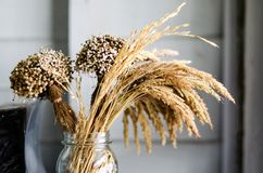 Wheat dried in glass jas to decorate the room. Wheat dried in glass bottles to decorate the room and bouquet of dried flowers Stock Image
