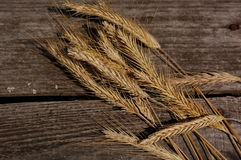 Wheat drying on the bench Stock Photography