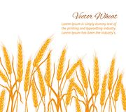 Wheat ear card. Royalty Free Stock Photography