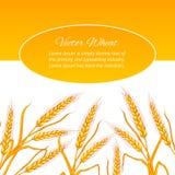 Wheat ear card. Stock Photo