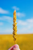 Wheat ear in hand Royalty Free Stock Photography