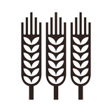 Wheat ear icon Stock Photo