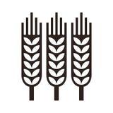 Wheat ear icon vector illustration