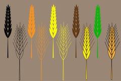 Wheat ear icon set,  barley ear vector illustration Royalty Free Stock Photo
