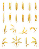 Wheat ear icon set. Set of simple wheat ears icons and wheat design elements for beer, organic wheat local farm fresh food, bakery themed wheat design, wheat stock illustration