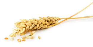 Wheat ear isolated on the white background Stock Photo