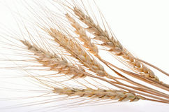 Wheat ear isolated on white background cutout Stock Photography