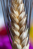 Wheat ear macro details Royalty Free Stock Photos