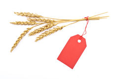 Wheat ear with red tag Royalty Free Stock Image