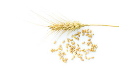 Wheat ear and seeds on white background Royalty Free Stock Image