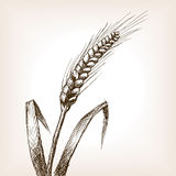 Wheat ear sketch style vector Royalty Free Stock Photography