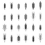 Wheat ear symbols for logo design Royalty Free Stock Images