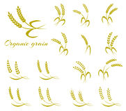 Wheat ear symbols for logo design. Stock Images