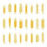Wheat ear symbols for logo design. Stock Photography