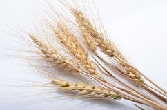 Wheat ear  on white background cutout Stock Photo