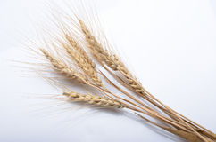 Wheat ear  on white background cutout Royalty Free Stock Photos