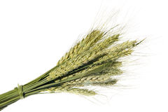 Wheat ear on the white background (isolated) Stock Photo