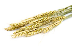 Wheat ears. On a white background Stock Image
