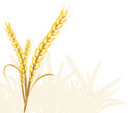 Wheat ears. Isolated on the white. Illustration Royalty Free Stock Images