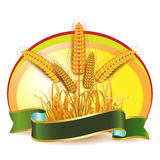 Wheat ears. With green ribbon Royalty Free Stock Image