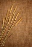 Wheat ears. Border on burlap background Stock Image
