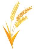 Wheat ears vector illustration