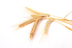 Wheat ears. Isolated on white background Royalty Free Stock Photography