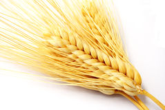 Wheat ears. Royalty Free Stock Photos