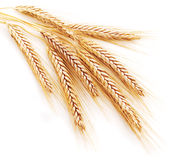 Free Wheat Ears Royalty Free Stock Photography - 6051567