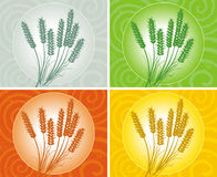 Wheat ears Stock Photos