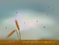 Wheat ears against the sky Royalty Free Stock Photo