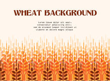 Wheat ears background. Agriculture background. Wheat field. Wheat ears pattern. Vector agriculture background. Wheat field Stock Images