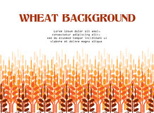 Wheat ears background. Agriculture background. Wheat field. Wheat ears pattern. Vector agriculture background. Wheat field Royalty Free Stock Photography