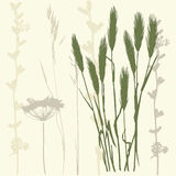 Wheat ears. Background with wheat ears and branches. vector illustration Stock Photo