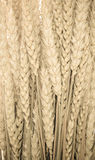 Wheat ears background Royalty Free Stock Photo
