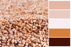 Wheat ears background Stock Images