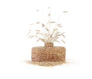 Wheat ears in basket. Isolated on a white background Stock Images