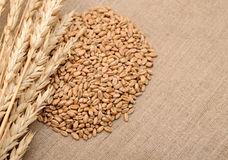 Wheat ears border Royalty Free Stock Photography
