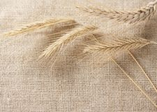 Wheat ears border on burlap background Stock Photos