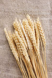 Wheat ears on burlap Royalty Free Stock Images