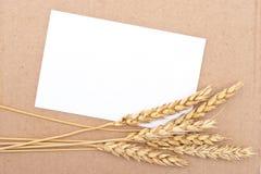 Wheat ears with card Stock Photos