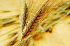 Wheat ears. Closeup of some ripe wheat ears Royalty Free Stock Image
