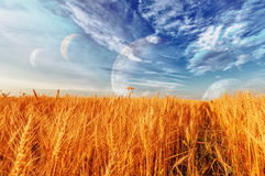 Wheat ears and cloudy sky with planets Stock Photography