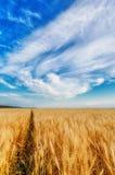 Wheat ears and cloudy sky Stock Photos
