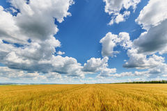 Wheat ears and cloudy sky Royalty Free Stock Images