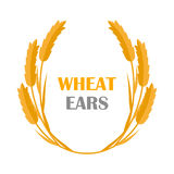 Wheat Ears Concept Illustration in Flat Design. Wheat Ears vector banner in flat style design. New harvest, grain growing concept. Illustration for bakery Stock Images