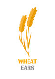 Wheat Ears Concept Illustration in Flat Design. Wheat Ears vector banner in flat style design. New harvest, grain growing concept. Illustration for bakery Royalty Free Stock Photography